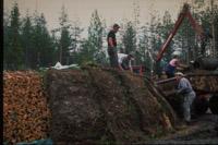 Finsk tjæremile med skovbund